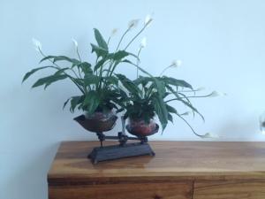 Balanza floral